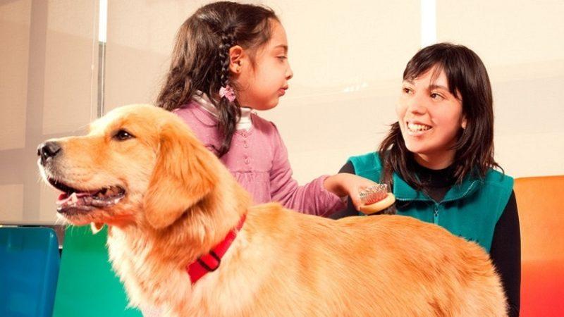 Education du chien
